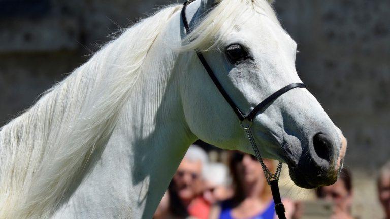 Dans l'Orne, un haras vous fait découvrir ses chevaux